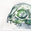 Schädel, Aquarellmalerei, Katze, Katzenschädel