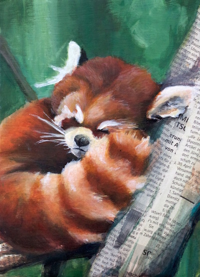 Zeitung, Acrylmalerei, Roter panda, Collage, Tiere, Fell