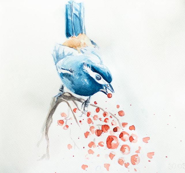 Vogel, Tiere, Leeren, Blau, Aquarell