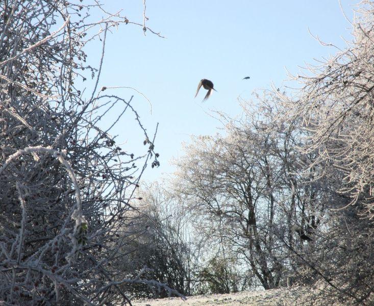 Fotografie, Hell, Winterimpression, Natur, Rauhreif, Fliegen