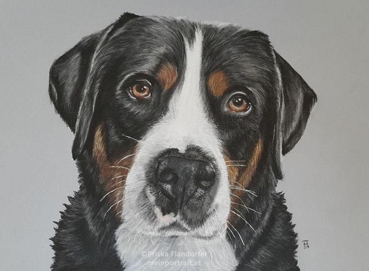 Hundeportrait, Tiere, Hund, Tierportrait, Portrait, Buntstiftzeichnung