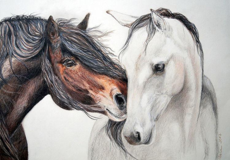 Liebe, Tiere, Portrait, Pferde, Zeichnungen