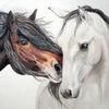 Portrait, Pferde, Tiere, Liebe