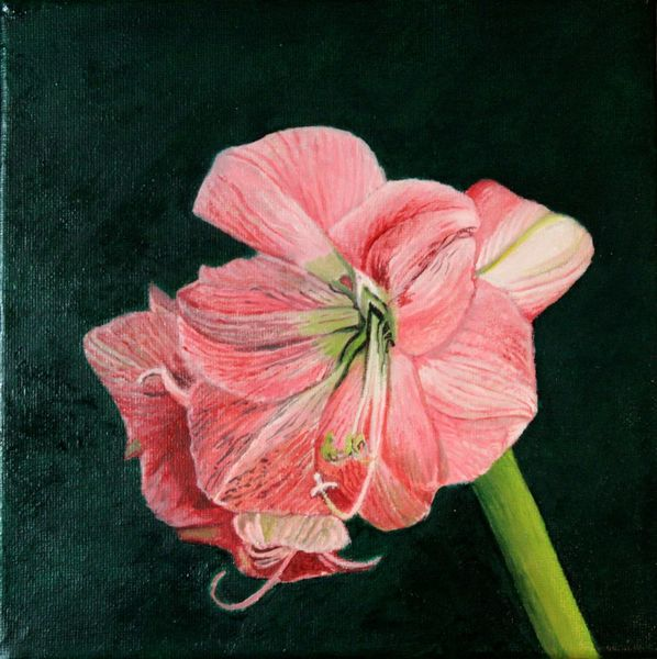 Blumen, Blüte, Amaryllis, Ölmalerei, Malerei,