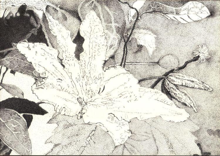 Natur, Blumen, Schwarz weiß, Blätter, Blüte, Tuschmalerei