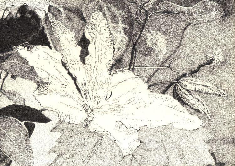 Tuschmalerei, Zeichnung, Blumen, Natur, Schwarz weiß, Blätter