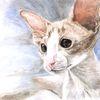Blick, Katze, Akt, Aquarell