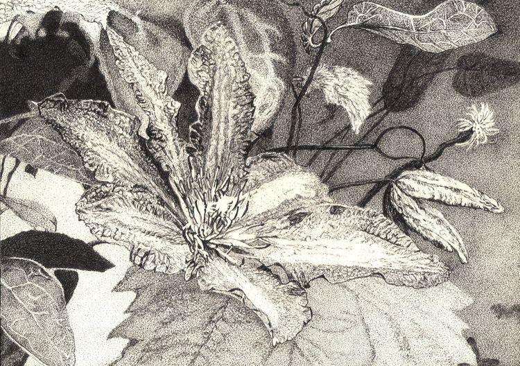 Pflanzen, Tusche, Blüte, Natur, Zeichnung, Blätter