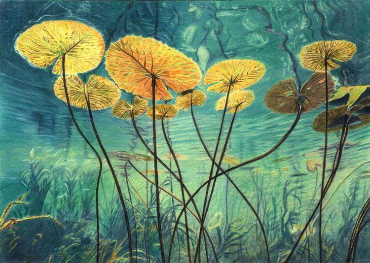 Seerosen, Unterwasser, Stängel, Zeichnungen
