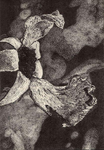 Blüte, Schwarz weiß, Blumen, Zeichnung, Pflanzen, Zeichnungen