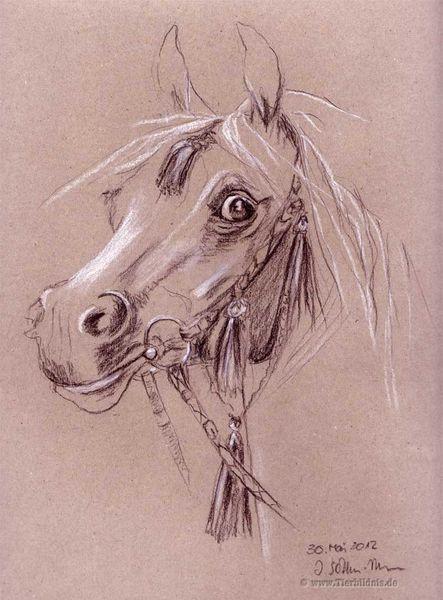 Pferdeportrait, Arabischer schimmelhengst, Nazeersohn, Araber, El zahraa, Gemälde