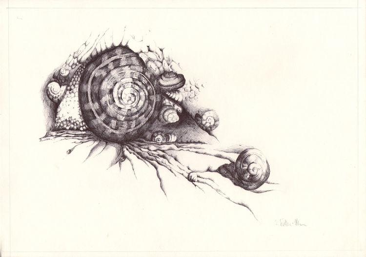 Zeichnung, Strand, Schnecke, Tiere, Strandgut, Realismus