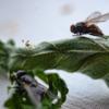 Blätter, Fliege, Lamm, Fotografie
