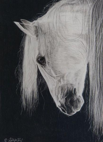 Zeichnung, Pferdeportrait, Pferdezeichnung, Tierzeichnung, Pferde, Weißes pferd