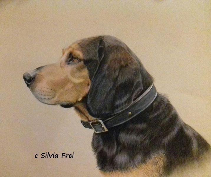 Hund, Bracke, Buntstiftzeichnung, Portrait, Hundeportrait, Zeichnung