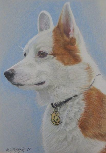 Hundezeichnung, Haustier, Polychromos, Hundeportrait, Tiere, Portrait