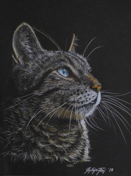 Katzenportrait, Tierportrait, Zeichnung, Tierzeichnung, Portrait, Katze
