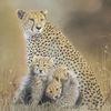 Gepard, Pastellmalerei, Zeichnungen, Wildtiere