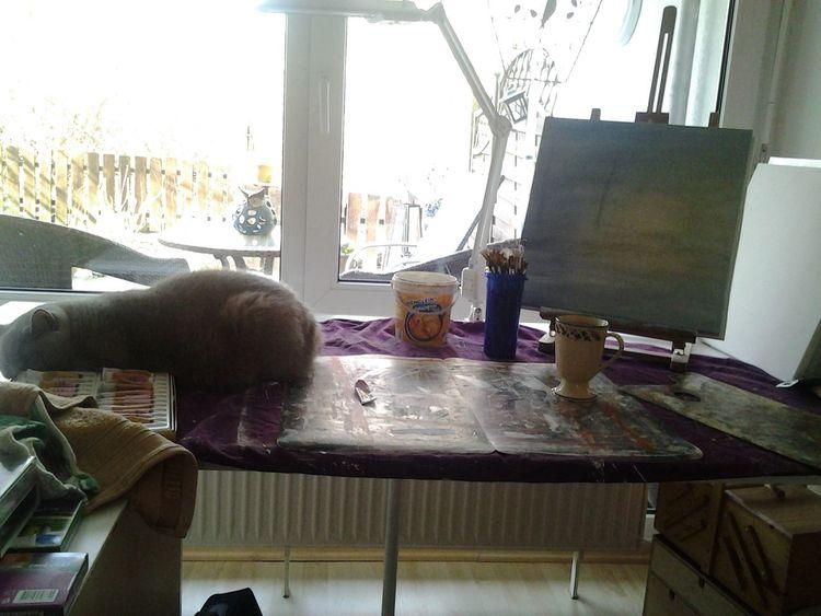 Planung, Avata, Katze, Fotografie, Malerei, Tiere