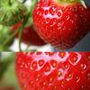 Früchte, Fotografie, Rot, Erdbeeren