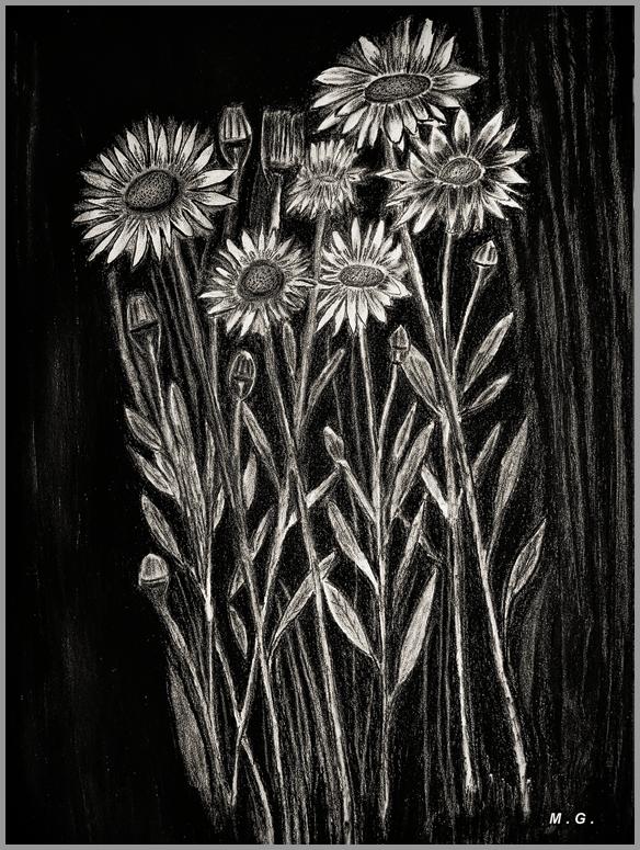 Bild: Margareten, Schwarzweiß, Blumen, Weiß von mg-art bei KunstNet