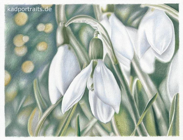 Schneeglöckchen, Frühling, Grün, Zeichnungen