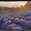 Lavendel, Feld, Sonne, Ölmalerei