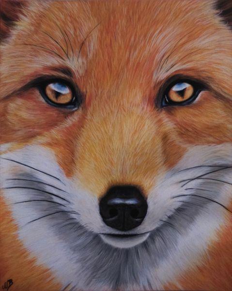 Fuchs, Tierwelt, Tiere, Natur, Pastellmalerei, Tierportrait