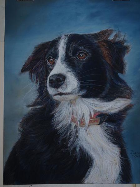 Portrait, Grenze, Pastellmalerei, Collie, Kreidezeichnung, Hütehund