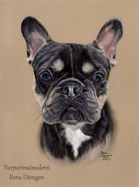 Bulli, Mops, Bullterrier, Tierportrait, Pastellmalerei, Zeichnungen