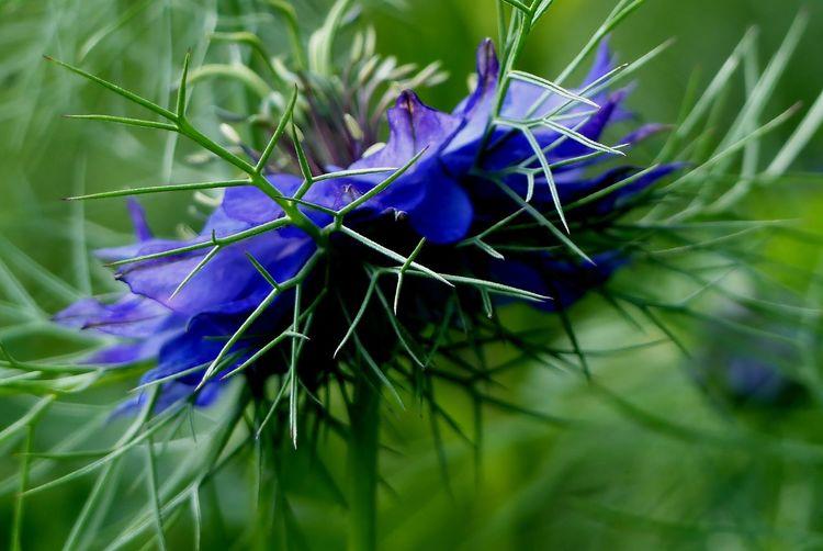 blaue blume busch blumen fotografie von gedanke bei kunstnet. Black Bedroom Furniture Sets. Home Design Ideas