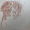 Hund, Portrait, Rötel, Zeichnungen