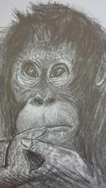 Natur, Tiere, Erde, Schwarz, Bleistiftzeichnung, Malerei