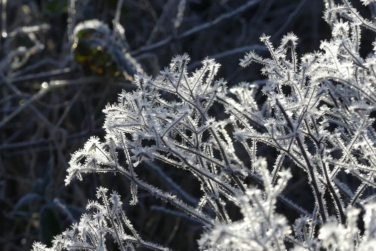 Frost, Rauhreif, Pflanzen, Eiskristalle, Winter, Fotografie