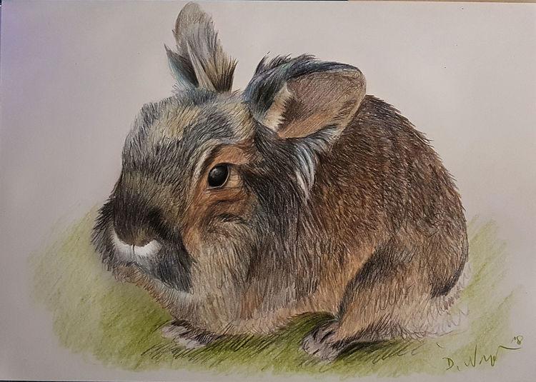 Hase, Polychromos, Haustier, Zeichnung, Fell, Zeichnungen