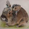 Haustier, Zeichnung, Fell, Hase