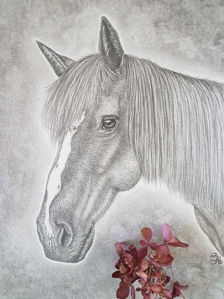 Augen, Malerei, Pony, Leben, Grafik, Bleistiftzeichnung