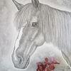 Pferde, Illustration, Niedlich, Kopf