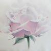 Rose, Pflanzen, Blumen, Aquarell