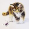 Katze, Tiere, Aquarell