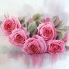 Rosa, Stillleben, Rose, Aquarell