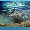 Riff, Unterwasser, Hai, Malerei