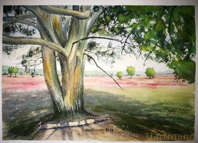 Aquarellmalerei, Heide, Licht, Schatten, Landschaft, Baum