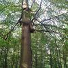 Naturgeist, Wald, Baum, Fotografie
