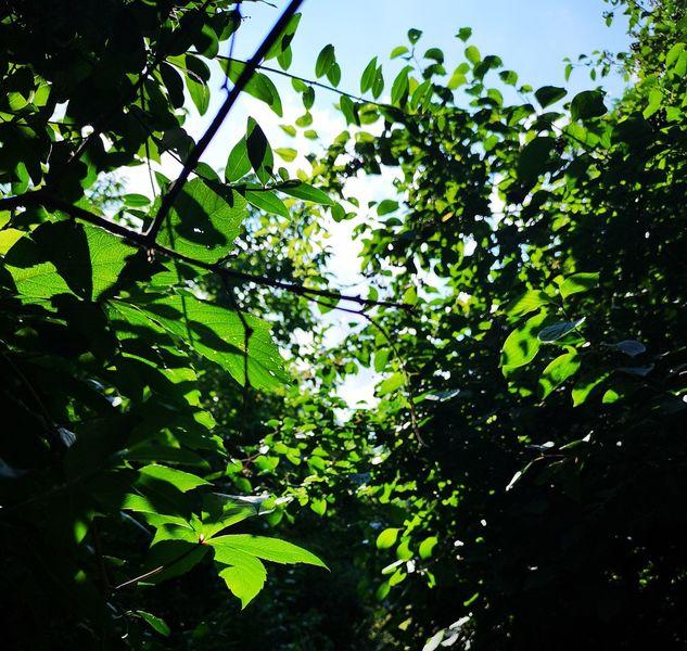 Blätter, Baum, Pflanzen, Natur, Fotografie
