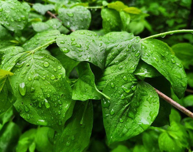 Regen, Blätter, Natur, Wald, Fotografie