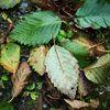 Blätter, Regen, Natur, Fotografie