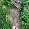 Menschen, Pflanzen, Natur, Fotografie