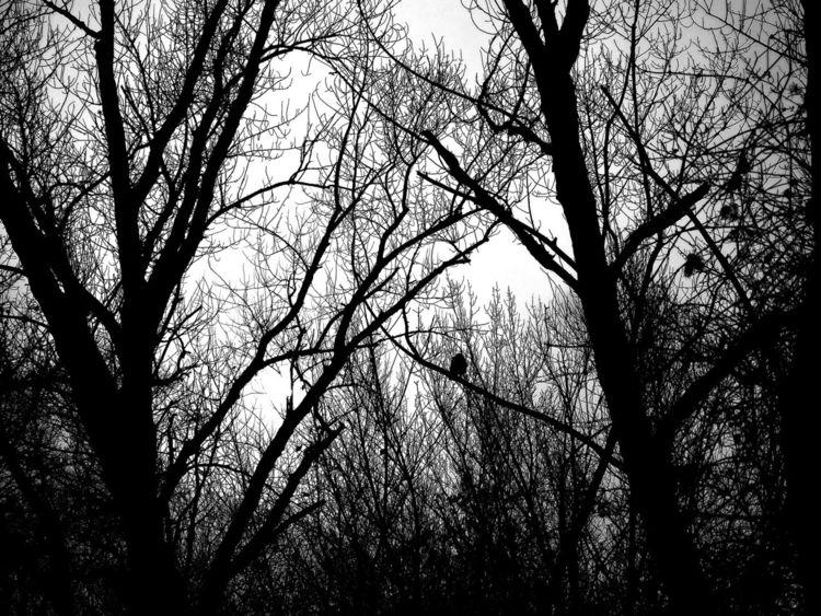 Pflanzen, Tiere, Wald, Fotografie