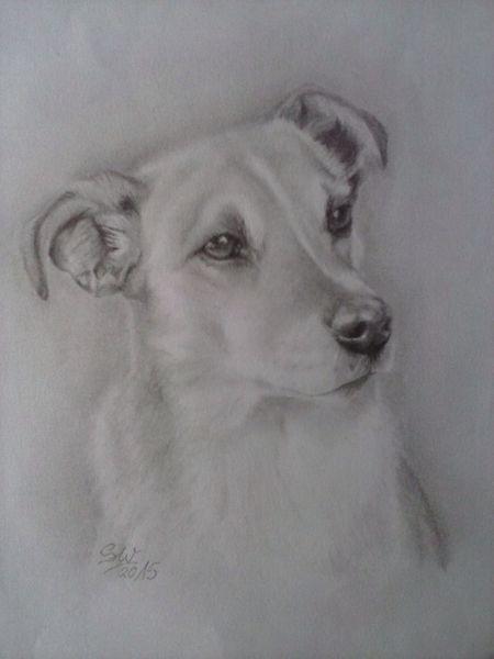 Portrait, Hund, Zeichnung, Zeichnungen